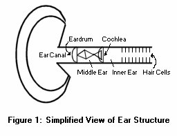 Simplified View of Ear Structure